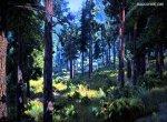 Затерянное место в темном лесу